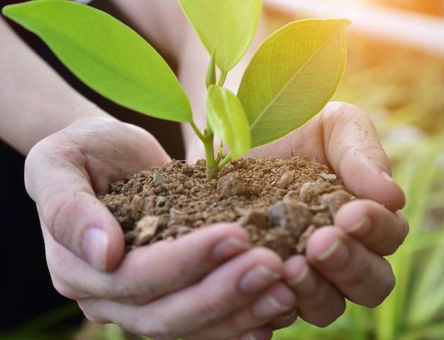 Menschen, die bäume pflanzen