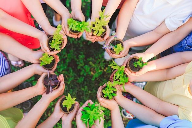Menschen hände schröpfen pflanze pflegen umwelt