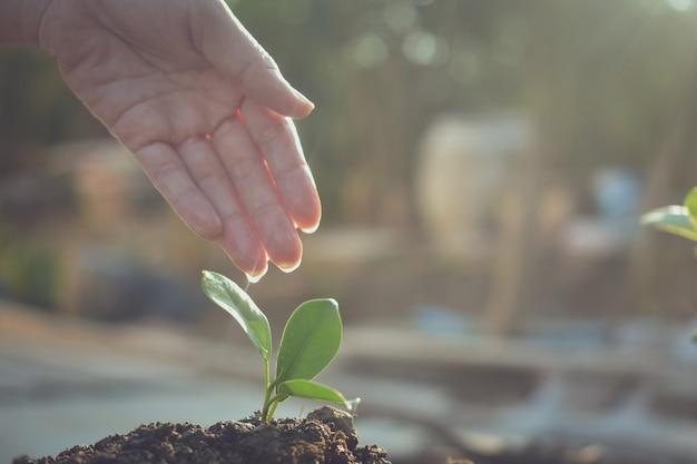 Menschen pflanzen bäume wachstum, gießen pflanzen und pflanzen bäume