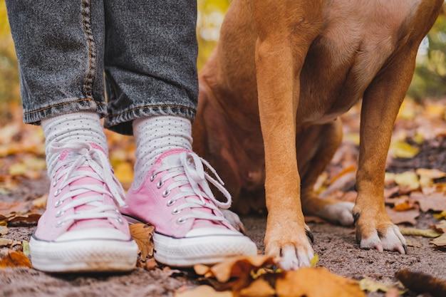 Menschen- und hundefüße unter herbstlaub. nahaufnahme schoss von den turnschuhen und von den beinen des hundes nebeneinander, das konzept der kameradschaft, bindung zwischen person und haustier