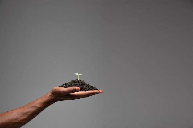 Menschliche hände, die eine frische grüne pflanze halten, symbol für wachsendes geschäft, umweltschutz und bankeinsparungen. planet in deinen händen. ökologische probleme der menschheit, grünes leben, neubeginn.
