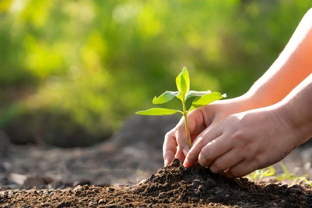Menschliche hände, die einen jungen grünen baum pflanzen. retten sie das welt- und weltumwelttag-konzept.