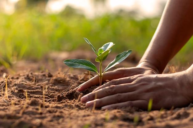 Menschliche hände, die sämlinge oder bäume in den boden pflanzen