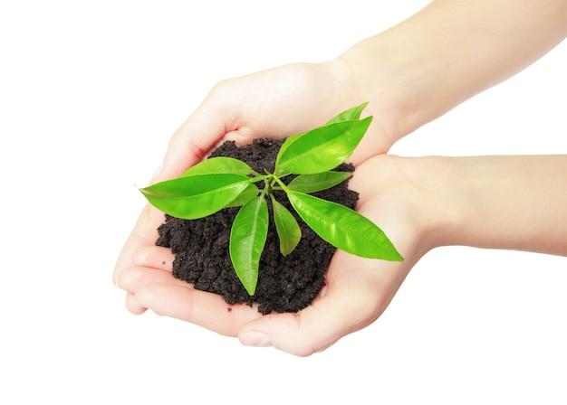Menschliche hände halten grünes neues pflanzenkonzept der kleinen pflanze