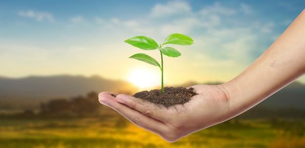 Menschliche hände halten sprießen junge pflanze. umwelt tag der erde in händen von bäumen, die sämlinge wachsen