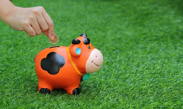 Menschliche hand, die geld in der piggy / kuhquerneigung mit gras spart