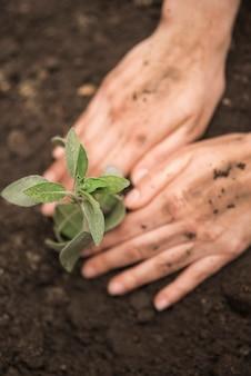 Menschliche hand, die junge anlage in boden pflanzt