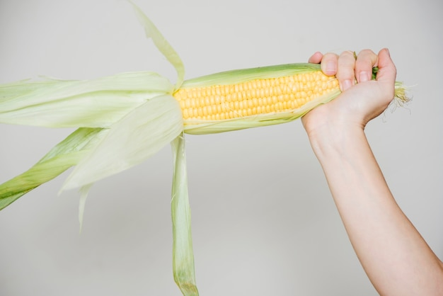 Menschliche hand, die maiskolben auf weißem hintergrund hält