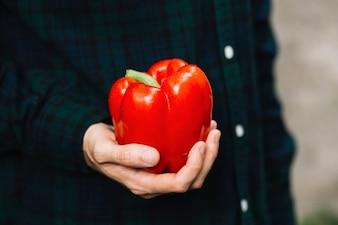 Menschliche Hand, die roten grünen Pfeffer hält