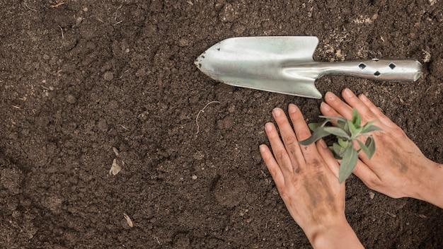 Menschliche hand, die sämling in boden nahe handschaufel pflanzt