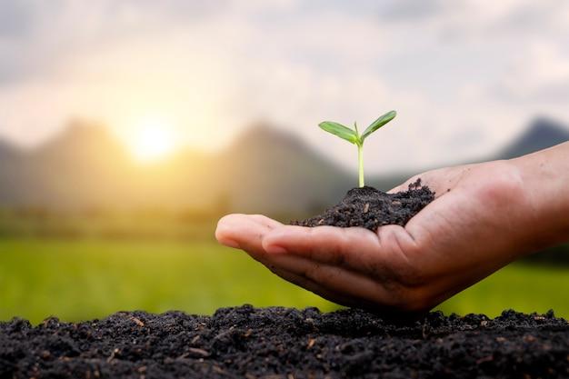 Menschliche hand, die setzlinge auf dem bodenkonzept zur erhaltung der natürlichen ressourcen pflanzt