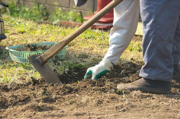 Menschliche hand, die spaten zum graben des bodenbodens hält.