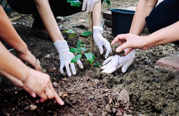 Menschliche hand pflanzte bäume, um die umwelt und das ökosystem zu schützen