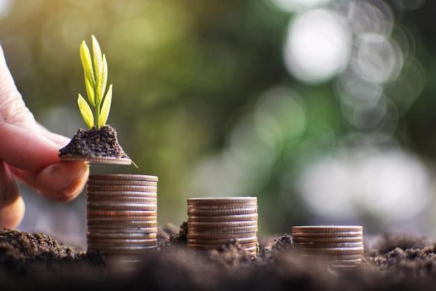 Menschliche hand, welche die münze pflanzt geld zum erfolg hält.