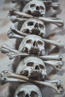 Menschliche knochen und schädel