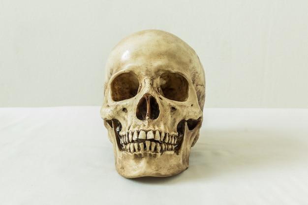 Menschlicher schädel auf einem weißen hintergrund