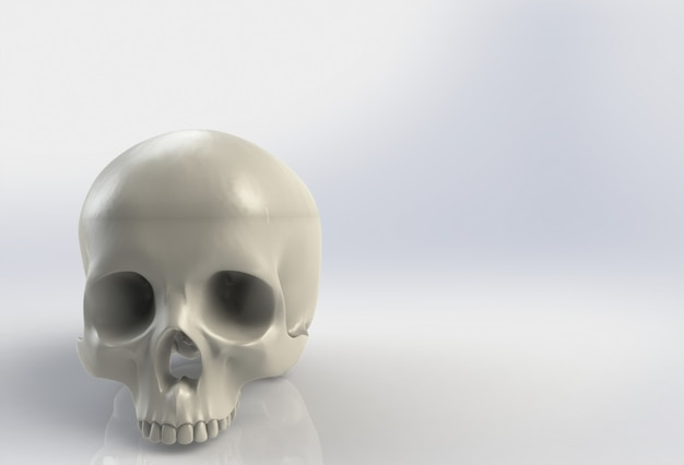 Menschlicher schädel auf getrenntem weißem hintergrund