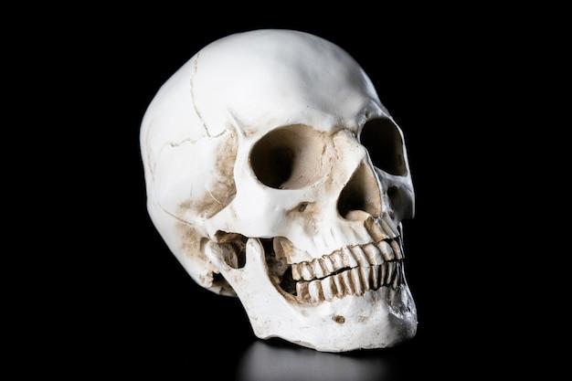 Menschlicher schädel lokalisiert auf schwarzem hintergrund. halloween-tageskonzept.