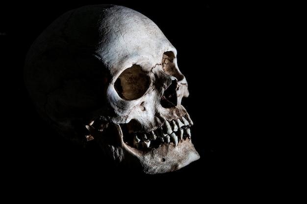 Menschlicher skelettschädelkopf getrennt auf schwarzem