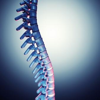 Menschlicher wirbelsäulenknochen 3d