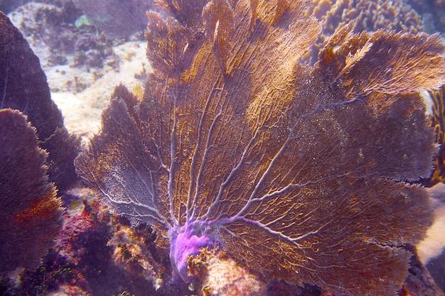 Mesoamerikanische barriere great mayan reef