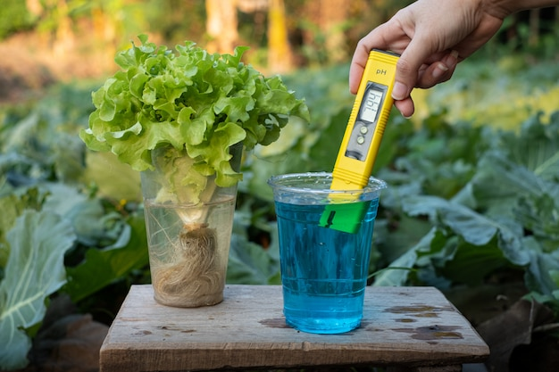 Messen sie den flüssigdünger in einer tasse mit einer neutralen anzeige des digitalen ph-messgeräts im hintergrund der kopfsalatpflanzen