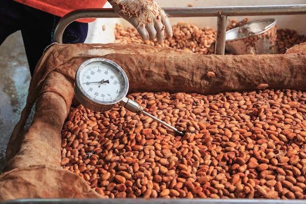 Messen sie die temperatur der fermentierten kakaobohnen.