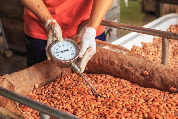 Messen sie die temperatur der fermentierten kakaobohnen