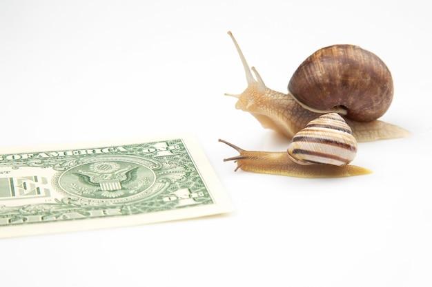 Metapher für den finanziellen erfolg im geschäft. schnecken laufen auf einer laufbahn für wohlstand.