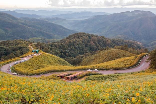 Mexikanische sonnenblume auf dem hügel in maehongson, thailand