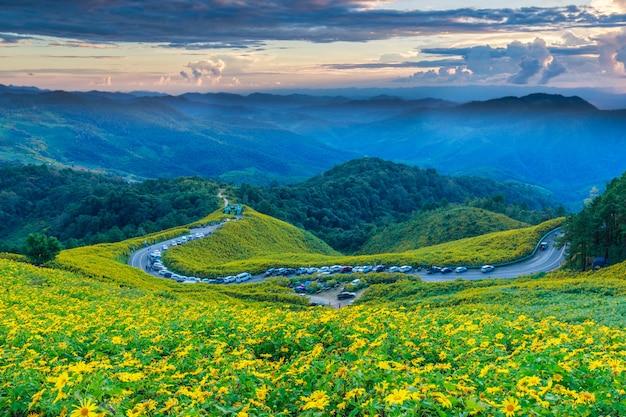 Mexikanische sonnenblume, schöne blume auf doi-mae-u-kor, maehongson-provinz, thailand.