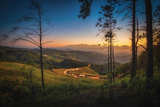 Mexikanische sonnenblume (tung bua tong blume) auf berg bei sonnenuntergang in der provinz mae hong son, thailand.