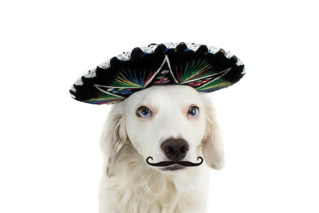 Mexikanischer mariachi-hund tragen mütze und einem mustache oder einem mustache