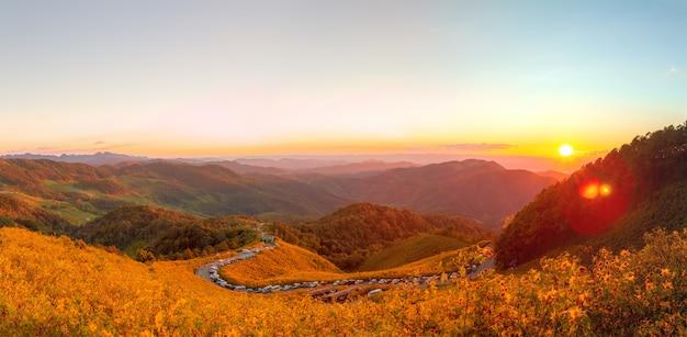 Mexikanisches sonnenblumenfeld panorama