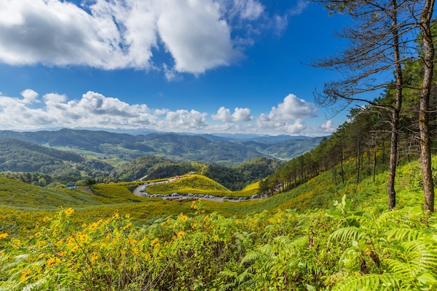 Mexikanisches sonnenblumenfeld tung bua tong in provinz maehongson (mae hong son) bei thailand.