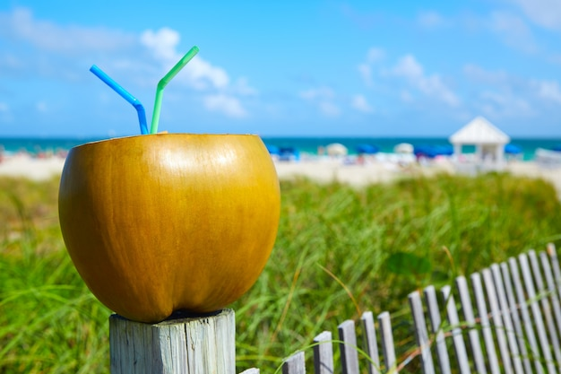 Miami south beach 2 strohhalme kokosnuss florida