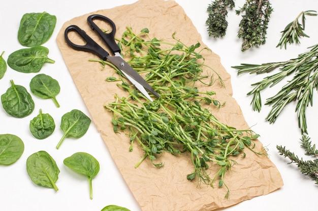 Microgreen erbsensprossen und schere auf braunem papier