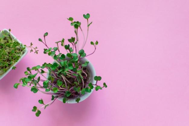 Microgreen-kresse, rosa rettich keimt auf rosa, flacher lage, draufsicht, copyspace