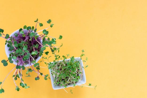 Microgreen-kresse, rosa rettichsprösslinge auf gelber, flacher lage, draufsicht, copyspace