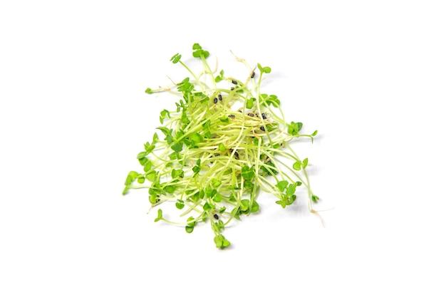 Microgreens basilikum isolat auf einem weißen hintergrund. selektiver fokus. essen.