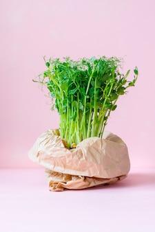 Microgreens im topf gekeimte erbsen oder bohnen im topf grüne sprossen für zu hause gekeimten salat
