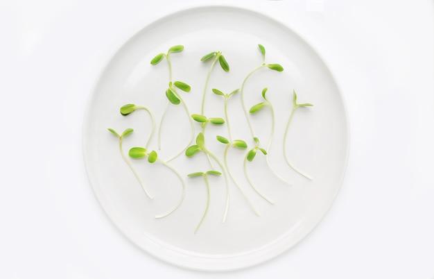 Microgreens-sämlinge auf weißer platte gegen weißen hintergrund.