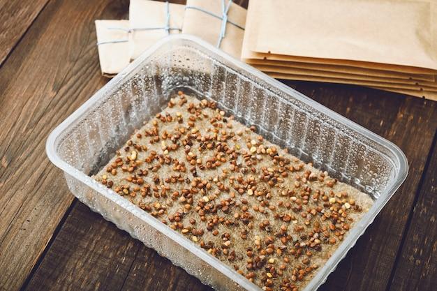 Microgreens zur keimung vorbereitet. samen in behälter auf nasser leinenmatte gesät.