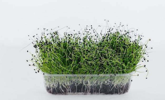 Mikro-grüne zwiebelsprossen nahaufnahme auf weißem hintergrund in einem topf mit erde. gesundes essen und lebensstil.