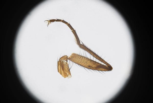 Mikroskopische fotografie eines stubenfliegenbeins