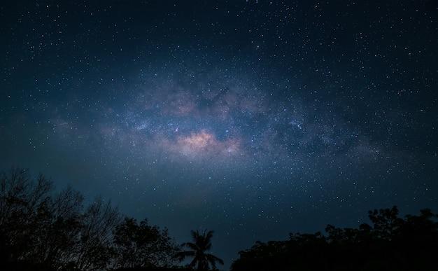 Milchstraße über wald in der nacht