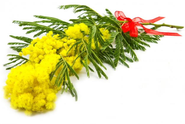 Mimose, frauentag