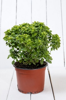 Mindestmenge pflanze