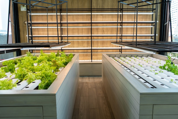 Mini farm für den anbau von salaten.
