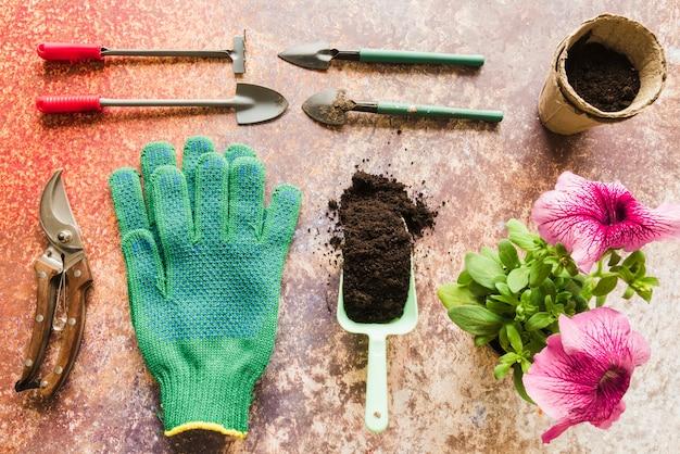Mini gartengeräte; gartenschere; handschuhe; boden; torftopf mit petunienblumenanlage auf schmutzhintergrund